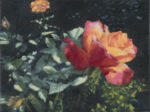 """Garden Rose"", 6"" x 8"", oil on canvas"