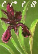 Corona-Iris