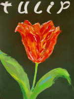 Corona Tulip