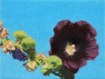"Hollyhock, 6"" x 8"", oil on canvas"